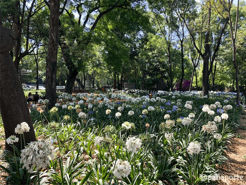 Bosque de Chapultepec 004