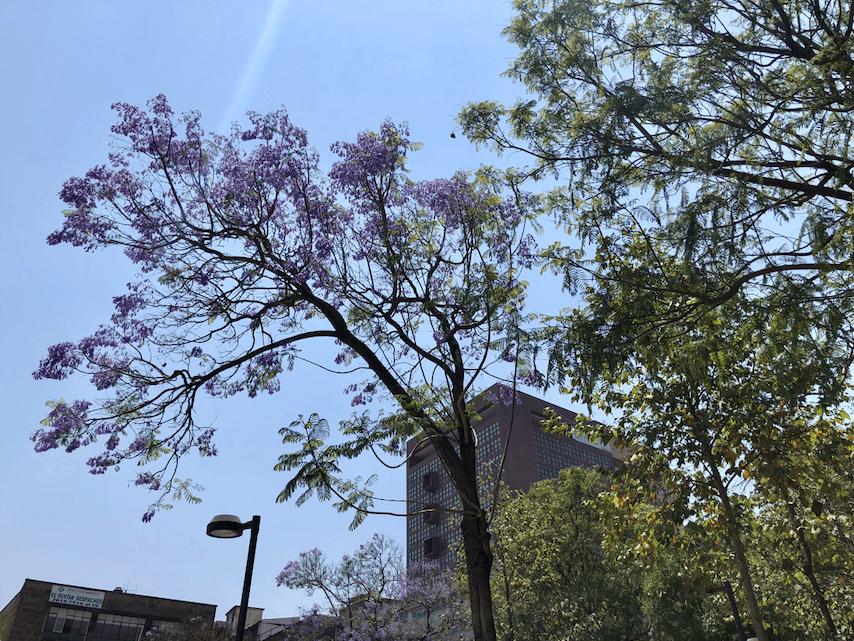 Ciudad de México en 3 días