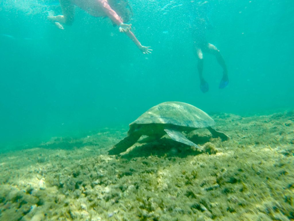 Boca Chica Isla Gamez 1