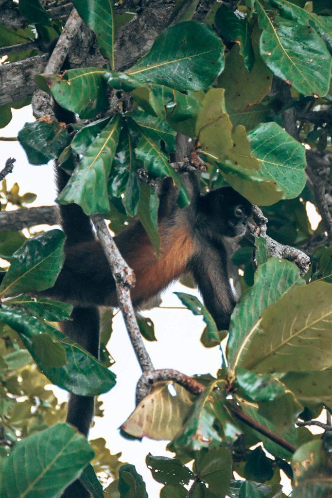 Isla de Monos