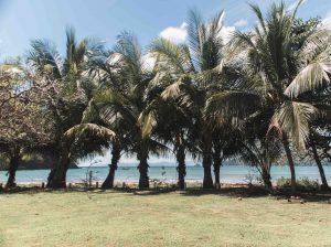 Panaporte Playa Venao 14